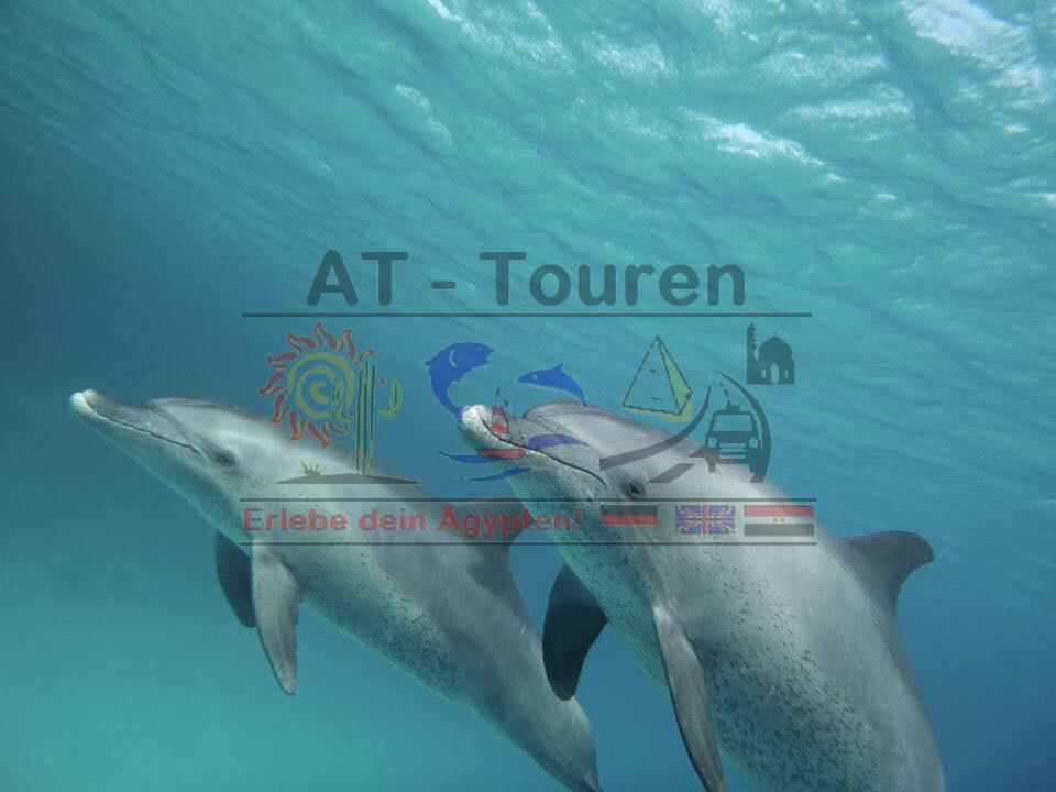 Delfinschwimmen Hurghada - natürlich in freier Wildbahn mit AT-Touren