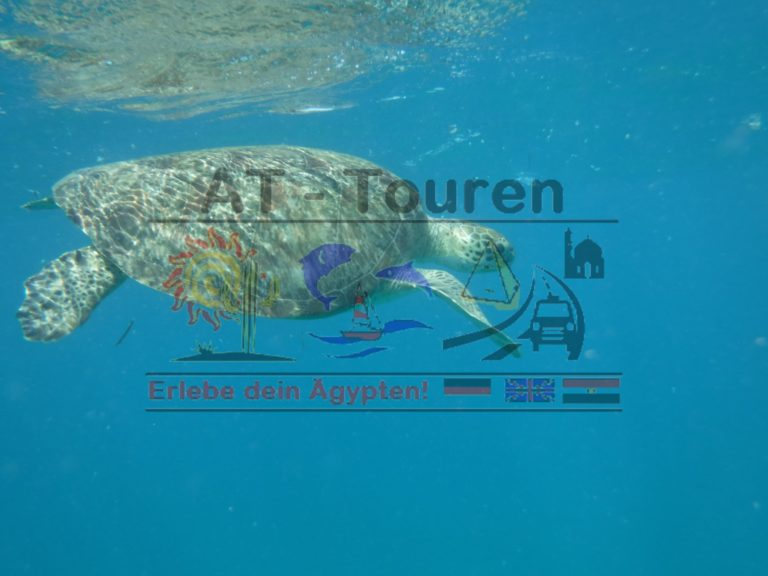 Marsa_Alam_Abu_dabbab_Schildkröten_Tour_AT_Touren_Hurghada_1__at-touren.de-min