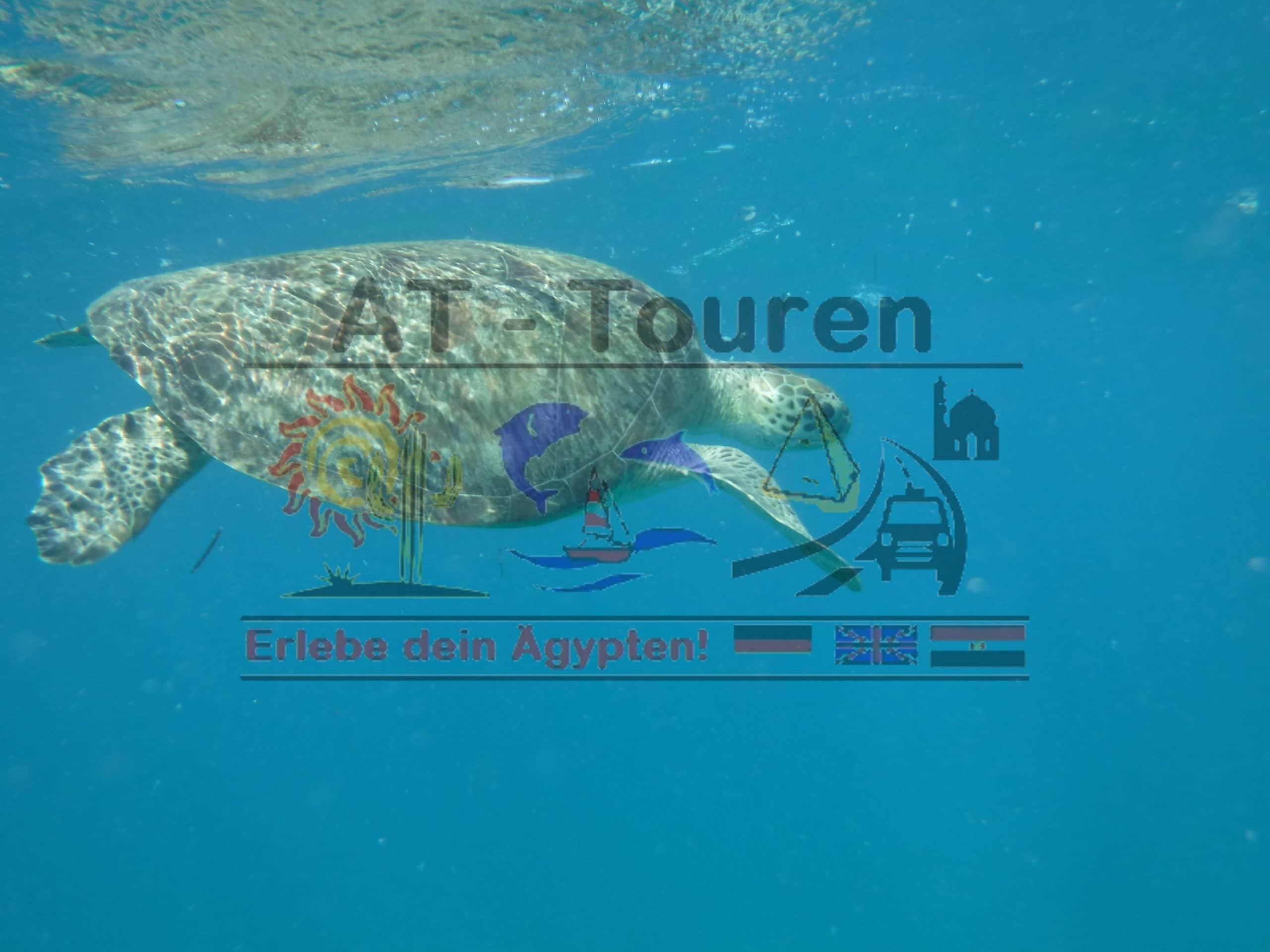 Tagesausflug nach Abu Dabbab in Marsa Alam Schnorcheln mit Schildkröten
