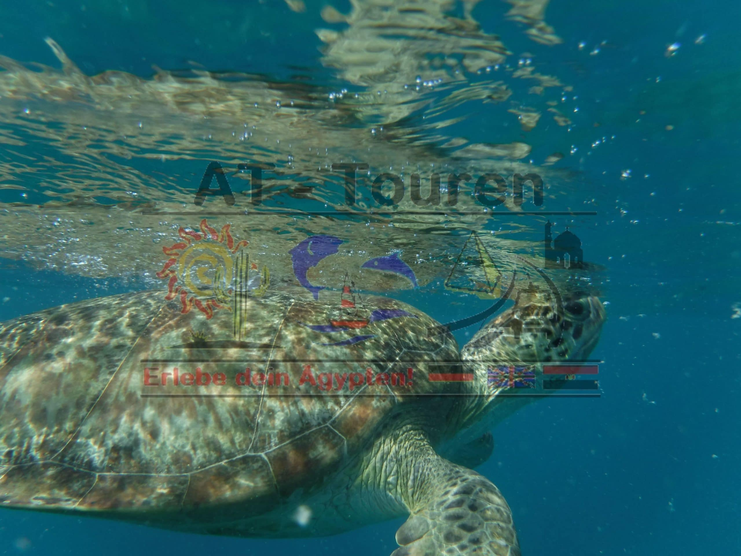 Marsa_Alam_Abu_dabbab_Schildkröten_Tour_AT_Touren_Hurghada_2__at-touren.de-min