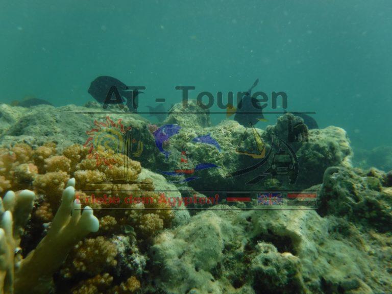 Marsa_Alam_Abu_dabbab_Schildkröten_Tour_AT_Touren_Hurghada_8__at-touren.de-min