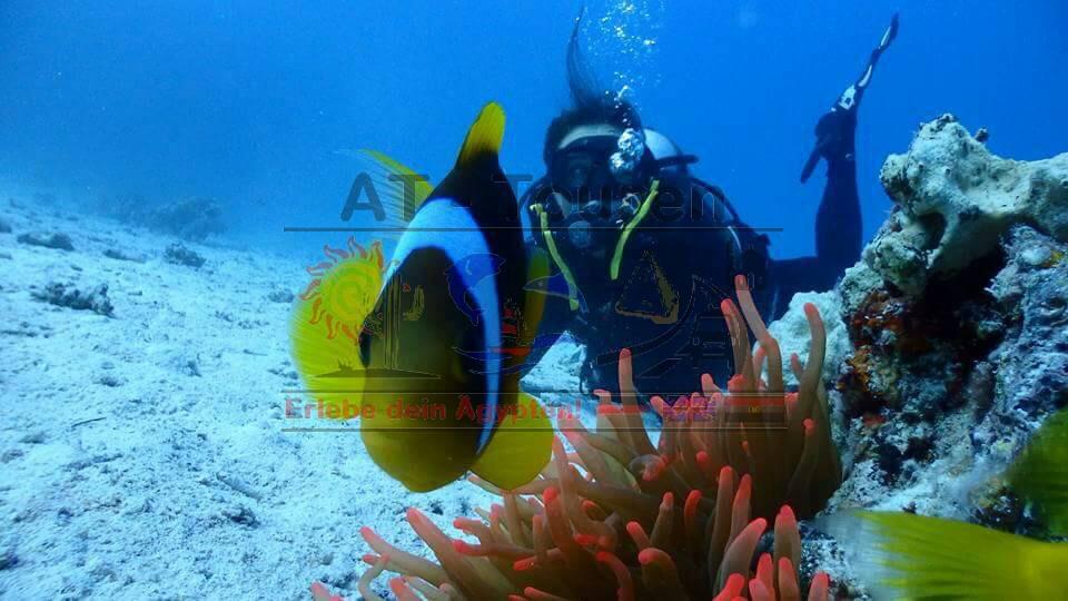 Schnuppertauchen in Hurghada mit AT-Touren